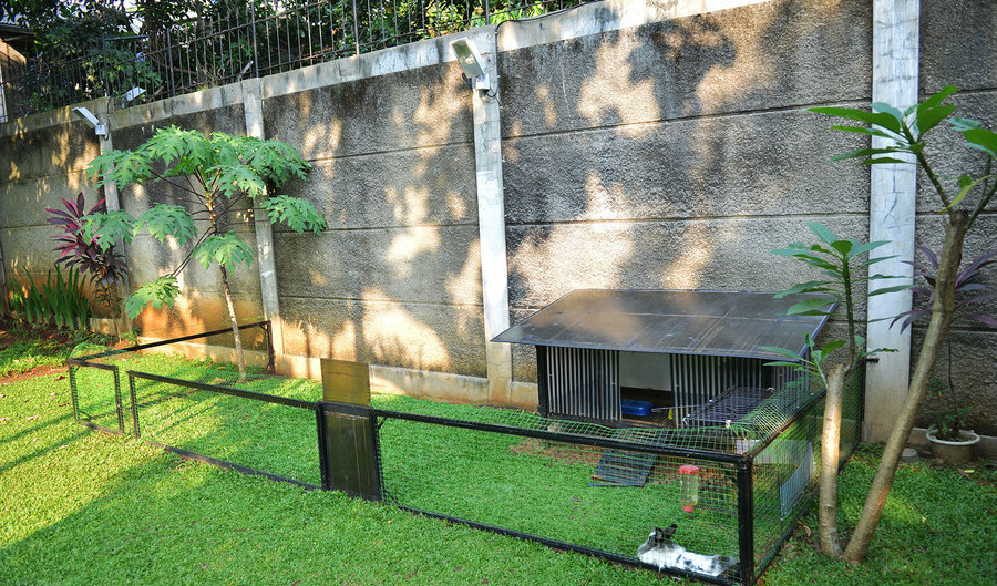halaman kelinci