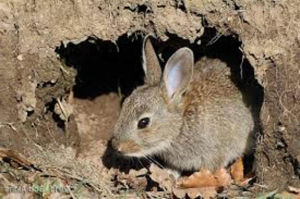 lubang kelinci